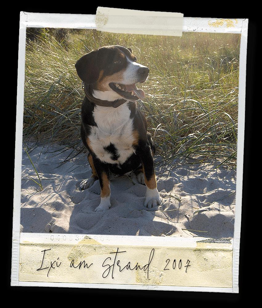 Ixi vom Igernbach am Strand 2007 ... ein Entlebucher Sennenhund vom Gehrshof in der Lüneburger Heide.