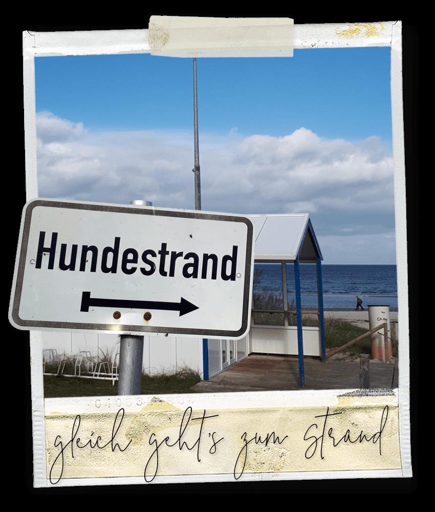 Gleich geht's zum Strand ... Marlo vom Tanneggergächli, der Entlebucher Sennenhund vom Gehrshof in der Lüneburger Heide.